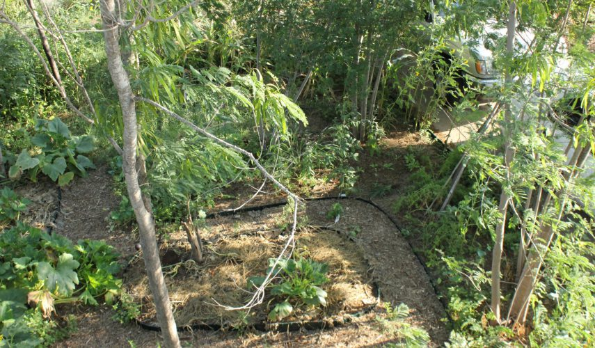 North Shore Permaculture