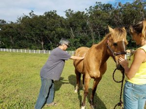 equine rolfing